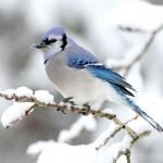 تصاویری زیبا از زمستان به همراه موسیقی