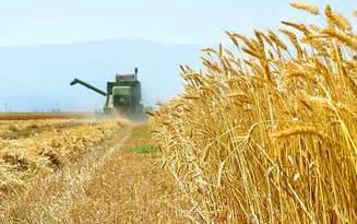 ۱.۵ میلیون تن واردات گندم انجام شده ۶.۵ مانده