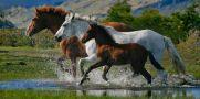 عکس هایی زیبا از اسب