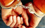 دستگیری ۳ قاچاقچی چوب در لاهیجان/ اعتراف به ۸ فقره سرقت