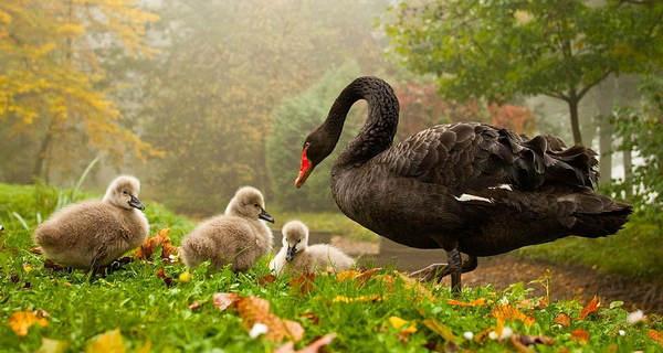 تصاویری زیبا از طبیعت و حیوانات