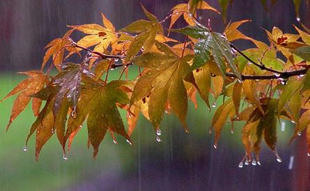 بارش باران لاهیجان