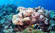 پیشگیری از ایدز با مرجان های استرالیایی