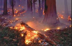آتش سوزی مراتع فارس