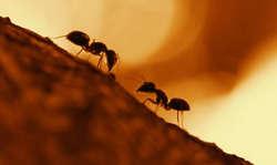 داستانک مورچه و حضرت سلیمان