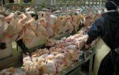 قیمت مرغ منجمد ۵۵۰۰ و مرغ گرم از نظر ما نزدیک ۷ تومان