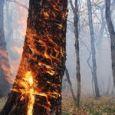 آتش سوزی جنگل در مازندران / تخریب حدود ۱۰۰ هکتار