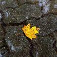 طراوت و نشاط در کرمان ، بارش باران مردم را خوشحال کرد