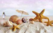 داستانک / پرتاب صدف های ساحل به دریا